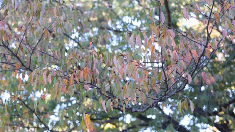 秋色見つけた