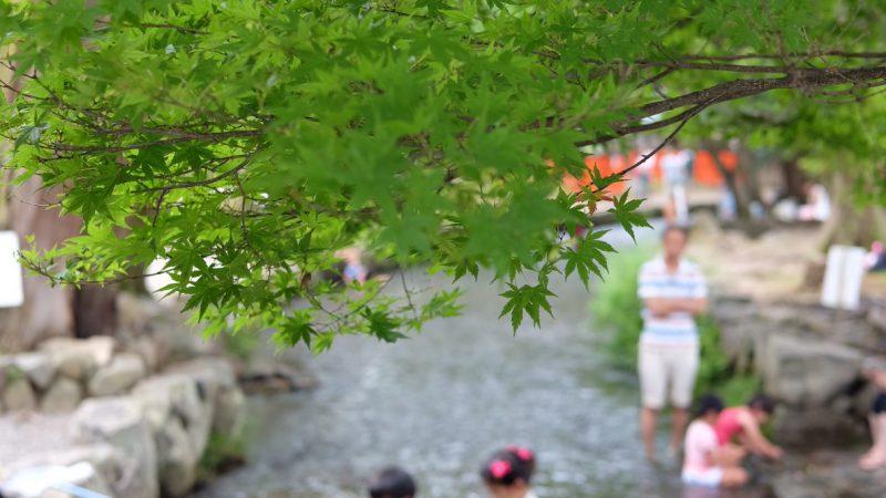 京都のお盆